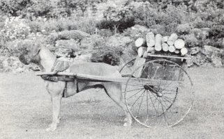 Cuckmere Krin - Pulling a dog cart - Picture taken 1940 - Taken from SWBC Blue Book 1982, Pg 61