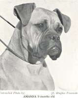 Panfield Amanda - Photo from The Dog World Annual 1942, Page 125