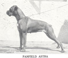 Panfield Astra - Left Side (The Dog World Annual 1943, Page 127)