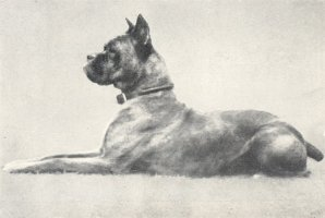 Quitta von Biederstein - Taken from Supplement to OUR DOGS 10 Dec 1937, Page 82