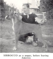 Rainey-Lane Sirrocco as a puppy, before leaving America - Photo from Dog World Annual 1962, Page 38