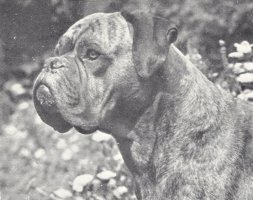 Stainburndorf Jaguar - Photo from The Dog World Annual 1947, Page 29