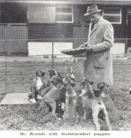Mr Rounds with Stainburndorf puppies - Taken from OUR DOGS Christmas Number 1959, Page 139